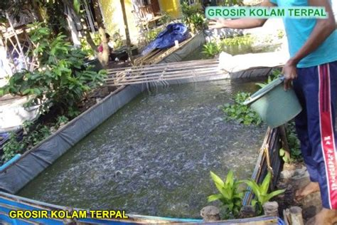 Harga Kolam Terpal Ikan Gurame budidaya ikan gurame kolam terpal agro terpal