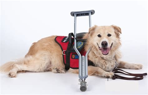 schools for service dogs service programs animals deserve better paws for