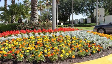 commercial landscaping orlando servello son