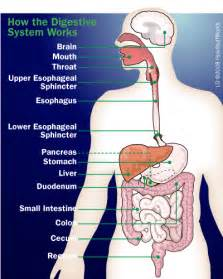 Fuel System How Stuff Works Had A Stomach Ache Like This Last I Had A Dull