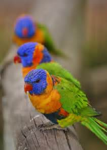 most colorful birds top 10 colorful birds around the world most beautiful