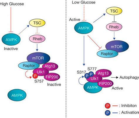 creatina y proteinas creatina c 243 mo y cu 225 ndo tomar para que sirve