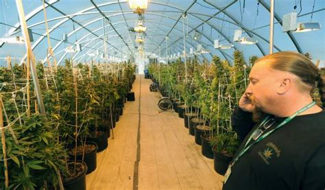 Garden Of Dispensary Budding Businesses Owners Prepare For Recreational