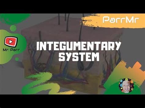 integumentary system song youtube