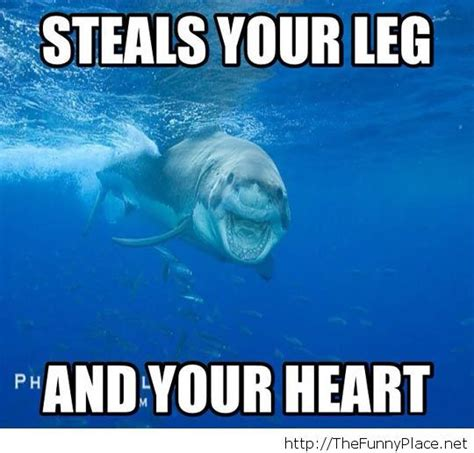 Meme Shark - sharks nom nom and memes on pinterest