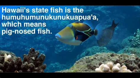 top 20 interesting facts you dont know about hawaii 2014