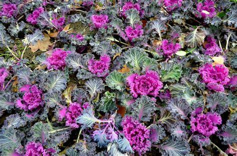 giardino invernale aiuola invernale giardino