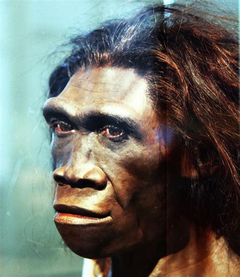 opinions on homo erectus