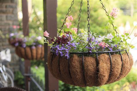 Hanging Flower Basket plant a flowering hanging basket