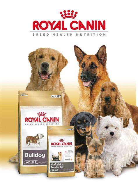 royal camini el mejor alimento para perros enterate aqui 4 patas