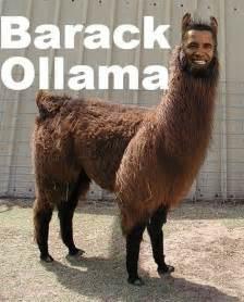 Funny Llama Memes - best 25 funny llama ideas on pinterest cute llama