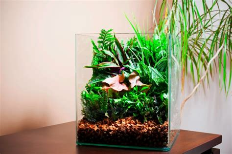Indoor Plants Singapore by 21 Plants To Avoid In The Aquarium Practical Fishkeeping