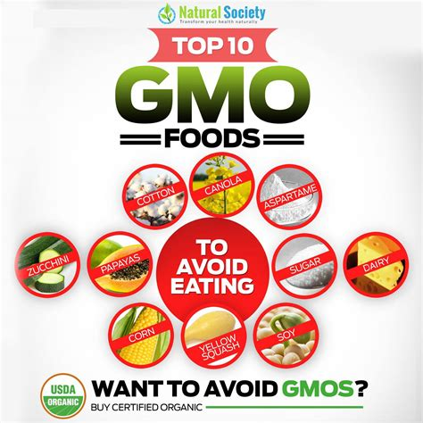 gmo food health effects gluten free diet with nutrition gmo food health effects gluten free diet with nutrition