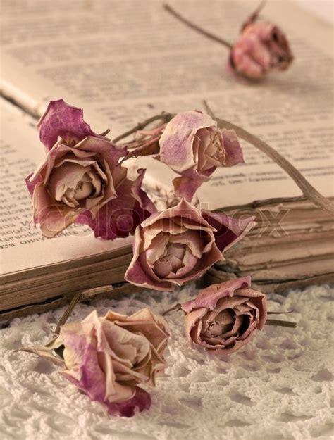 libro old roses dry rosen und ein altes buch sepia stockfoto colourbox