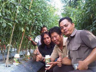 Pupuk Nongfeng Untuk Cabe kelompok tani modern sebagai petani modern kami pakai