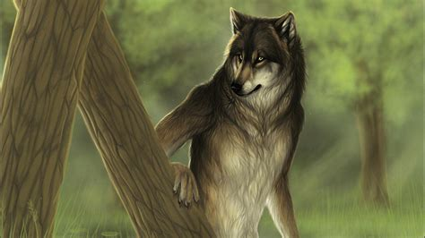 wolf full hd wallpaper and background image 1920x1080