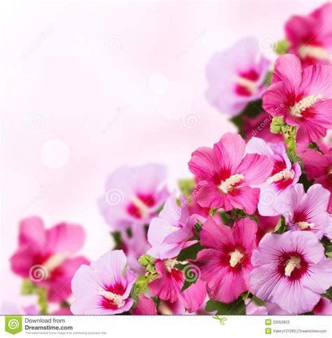 imagenes de rockeras hermosas flores hermosas fotos de archivo imagen 22053823