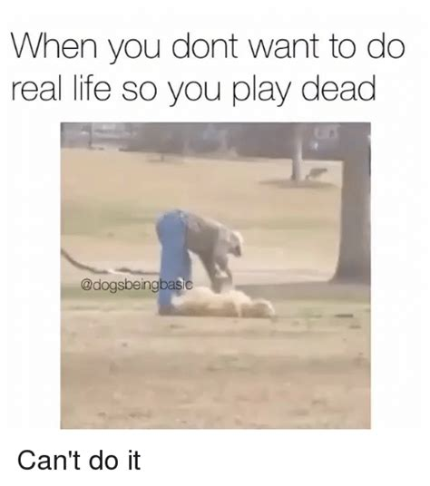 how do you a to play dead 25 best memes about dead dead memes