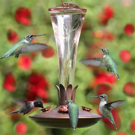 hummingbird supplies food feeders and accessories for