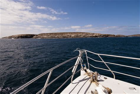south australia's neptune islands indo pacific images