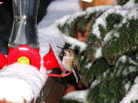17 best images about gardening hummingbirds on pinterest