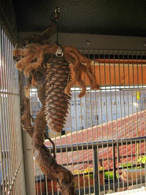 gabbia per scoiattoli giapponesi calopsite ho realizzato una voliera da esterno