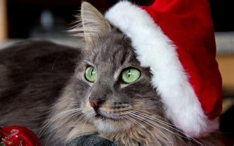 imagenes navidad gatitos fotos de gatos vestidos de navidad im 225 genes de navidad
