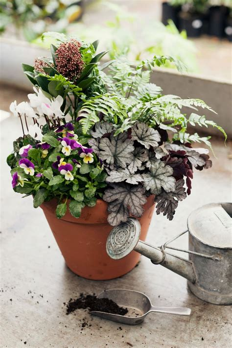 25 trending winter container gardening ideas on pinterest winter planter christmas urns and