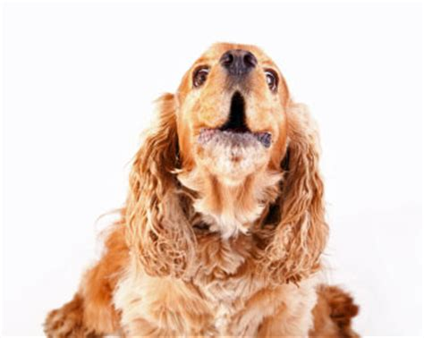 sound that will make your bark dogs barking at visitors can be a nuisance