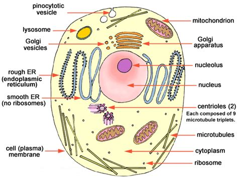 definition of animal biology cell biology reference notes