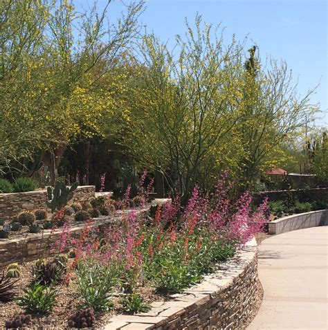 Restaurants Near Desert Botanical Garden Desert Botanical Garden Az Found Nature