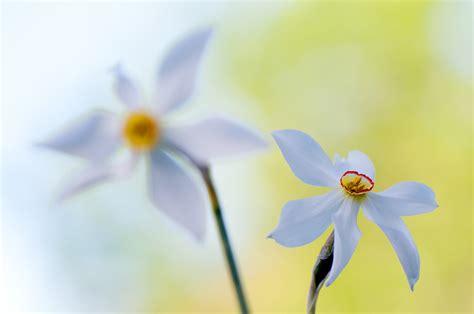 botanical colors botanical colors edwin giesbers