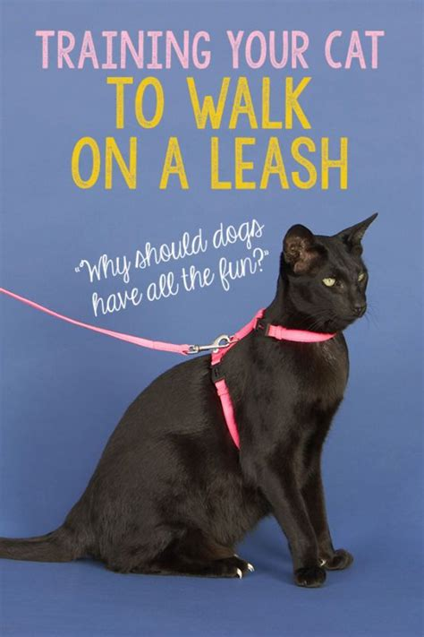 out on a leash how terryã s gave me new books your cat to walk on a leash beautiful days dr