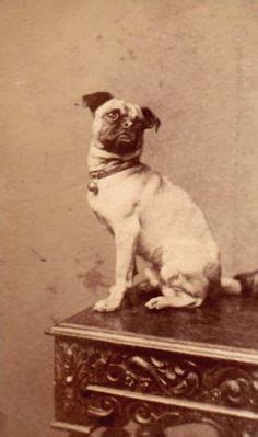 retro pug pugs vintage on pug pug photos and pug dogs