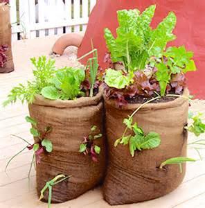 bag gardening vegetables bag gardening container gardening