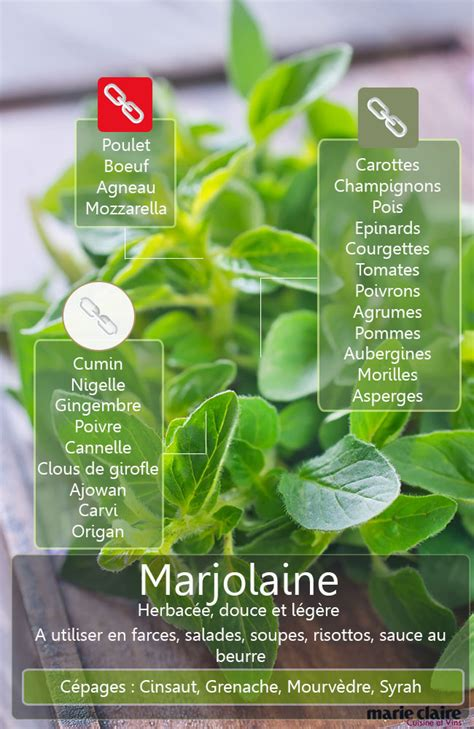 marjolaine cuisine comment utiliser la marjolaine en cuisine cuisine et