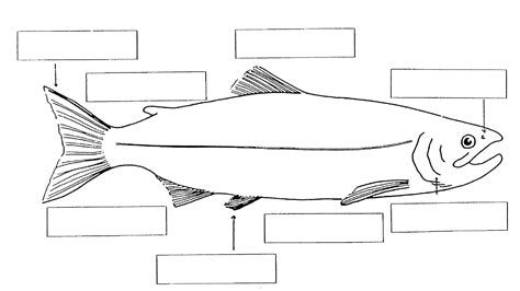 fish diagram coloring page fish anatomy worksheet worksheets releaseboard free