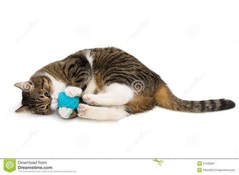 who plays cat katze spielt der wolle stockbild bild 37182681