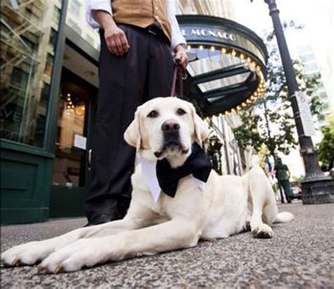 hotel chains that allow dogs the 5 best friendly hotel chains in the u s