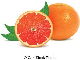 grapefruit clipart and stock illustrations. 3,186