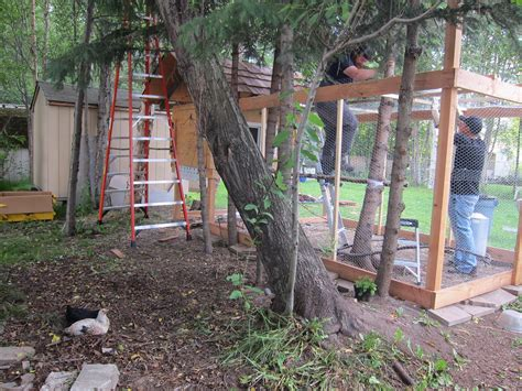building a backyard chicken coop building a backyard chicken coop diy coop part 3