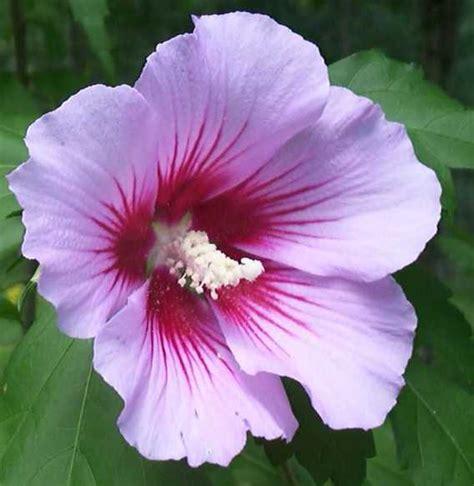 Bando Korea Green Flower of flower