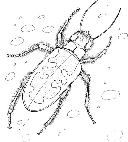 japanese beetle coloring page tiger beetle coloring page free printable coloring pages