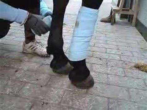vendas en las manos del caballos youtube