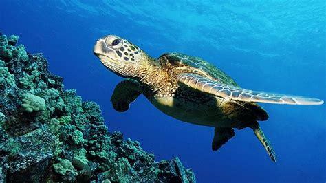 imagenes de animales que viven en el mar banco de im 193 genes viaje por el fondo del mar iii