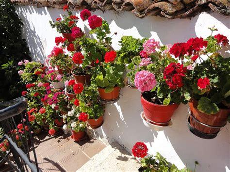 wallpaper bunga gantung foto gratis rumah bunga bunga gantung cantik gambar