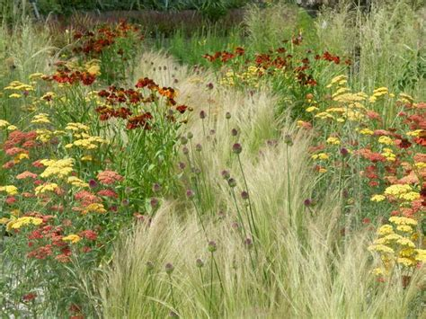 Prairie Lawn And Garden by 25 Beautiful Prairie Garden Ideas On Meadow