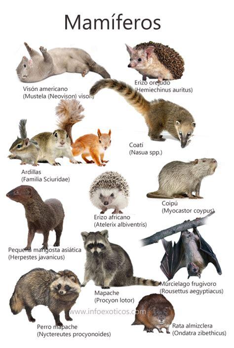 imagenes animales mamiferos especies de mam 237 feros catalogados como invasores en espa 241 a