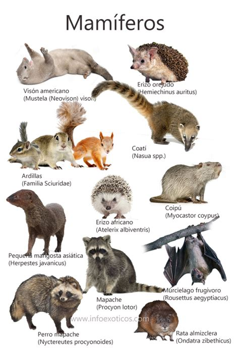 mamiferos de espana 8487334970 especies de mam 237 feros catalogados como invasores en espa 241 a infoex 243 ticos
