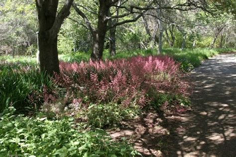 Rancho Santa Botanic Garden Rancho Santa Botanic Garden Places Worth Visiting